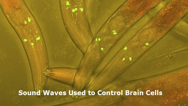 Sound Waves Used to Control Brain Cells