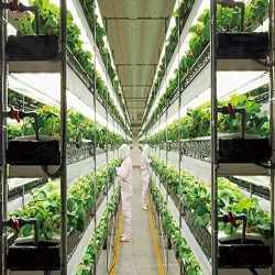 Vertical Farming, Plant Factory