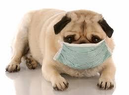 Animal Medical Masks Market
