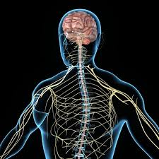 Central Nervous System (Cns) Biomarkers Market