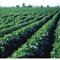Agricultural Inoculant Market