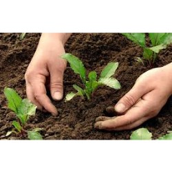Agrochemical Active Ingredients Market