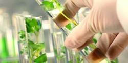 Bio-based Succinic Acid Market