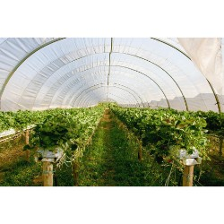 Commercial Greenhouse Market