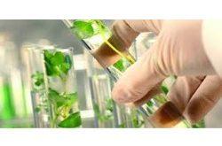 Petro-based Succinic Acid Market