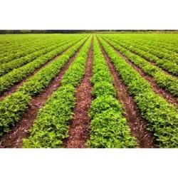 Soil Moisture Monitoring System Market