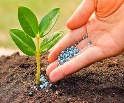 Potassium Fertilizer Market