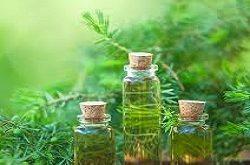 Tea Tree Oil Market
